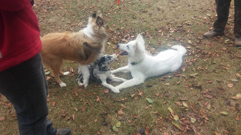 faire de nouvelles rencontres et du coup parler entre chien ....