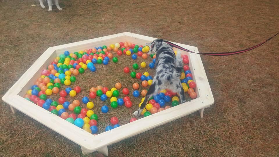 la piscine à balle ...une tuerie les chiens adorent