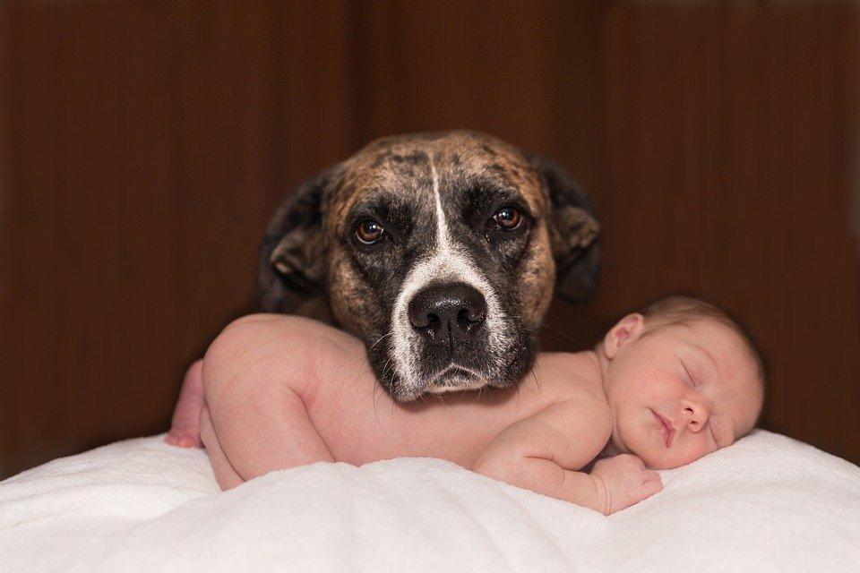Be be et chien