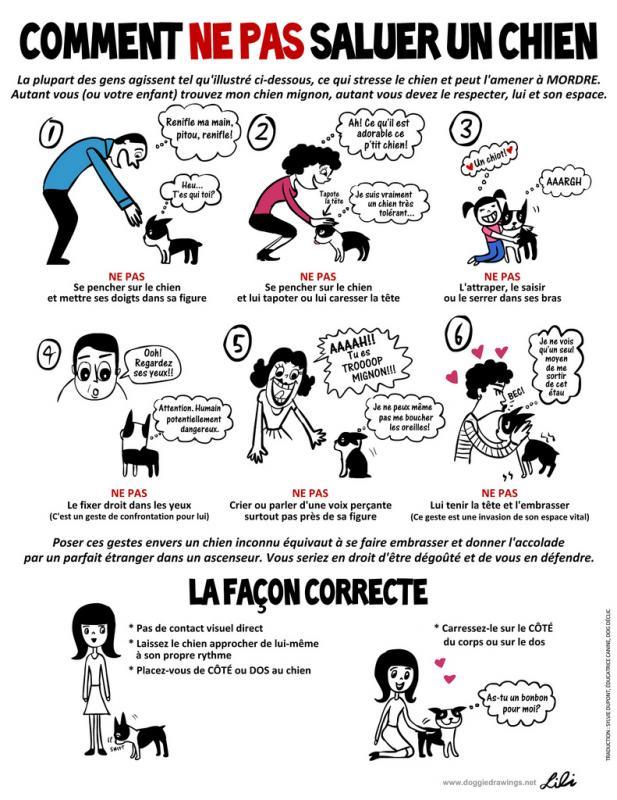 Comment ne pas saluer un chien