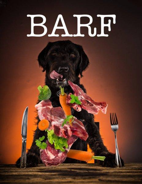 Depositphotos 150717334 stock photo hungry black mutt dog with