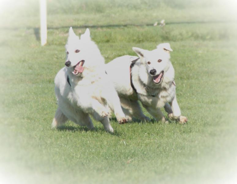 Hamsa et Loula