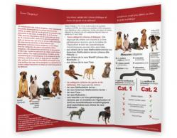 Formation chien de categorie verso