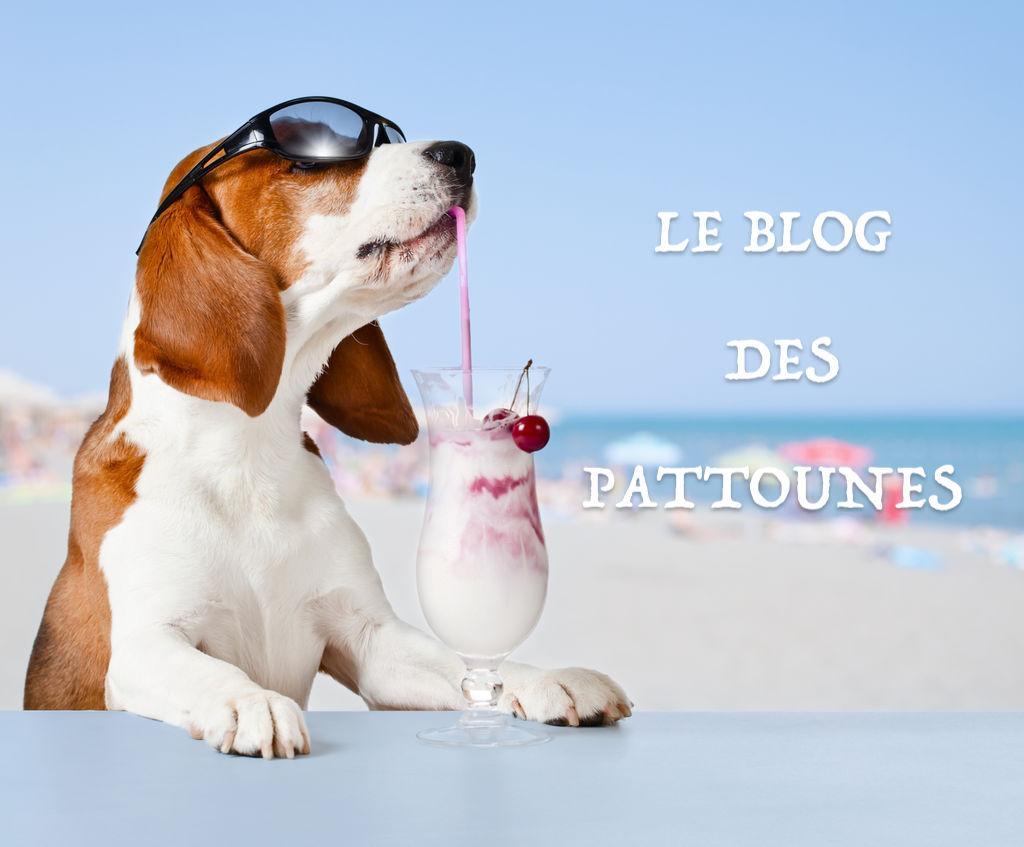 Le blog pattounes