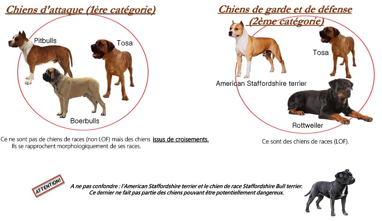 Tableau chien de categories