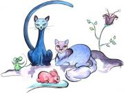 Visuel chat bleu